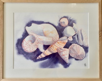 Coquillages. Crayon aquarelle, aquarelle, sur papier coton Sennelier. 2018